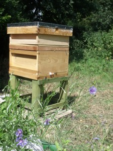 Hive and bee friendly plants