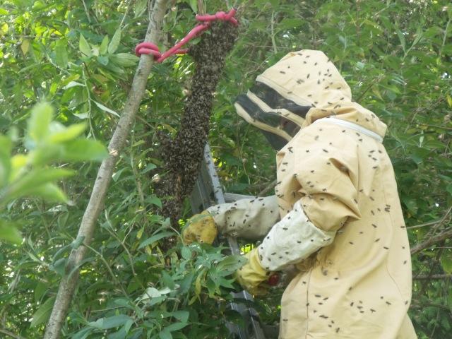 Len tackling the swarm