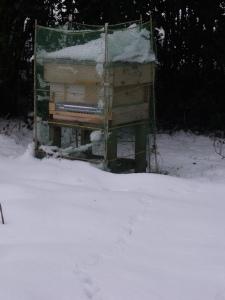 Hive 1 (no landing board)