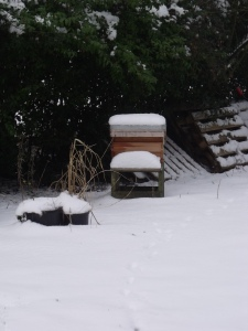 Hive 2 - with snow covered landing board