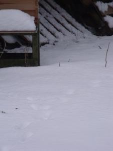 Tracks near the hives 1