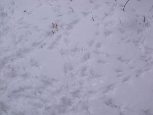 Tracks in the apiary
