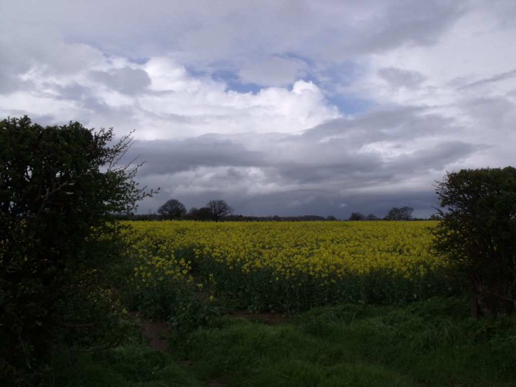just one of the OSR fields close by