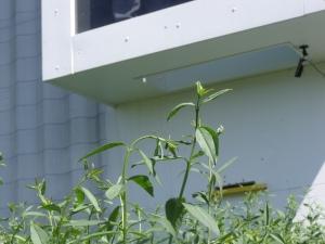 Hive entrance 1