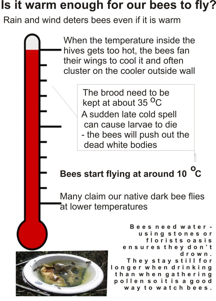Temperature and bees