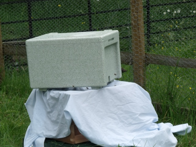Trying to set up the nuc box as a bait hive