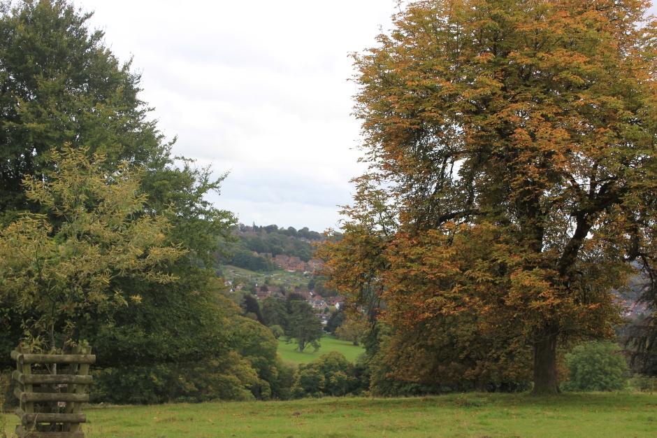 Autumn colours start to show near apiary