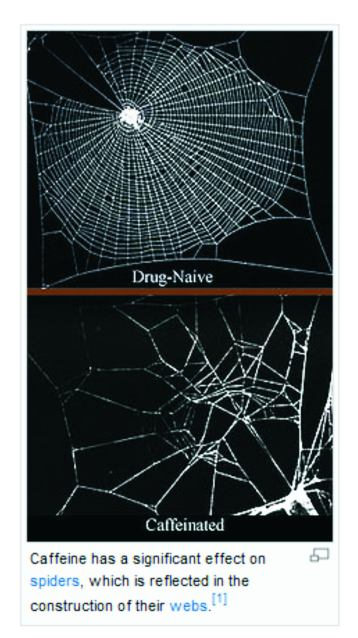 Spiders_web_after_caffeine